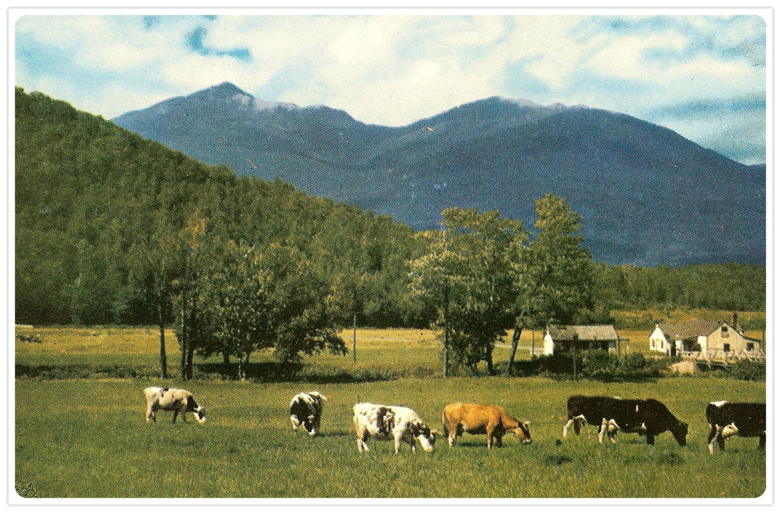 cow-scene-1_Fotor